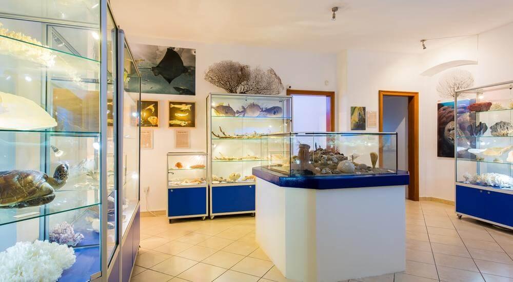 Акваріум у подарунок: переваги рішення, види резервуарів та акваріумних риб, підготовка акваріуму та його запуск