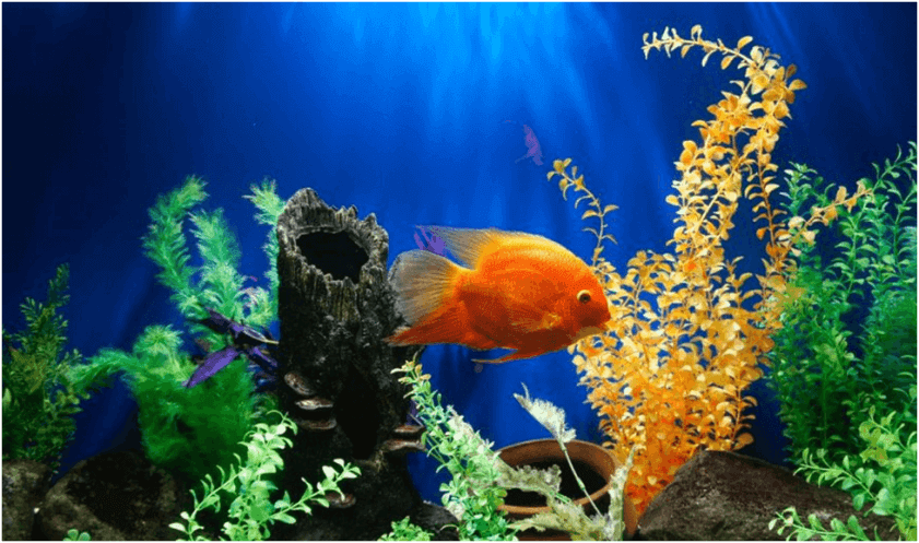Догляд за акваріумом