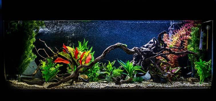 Різновиди акваріумів