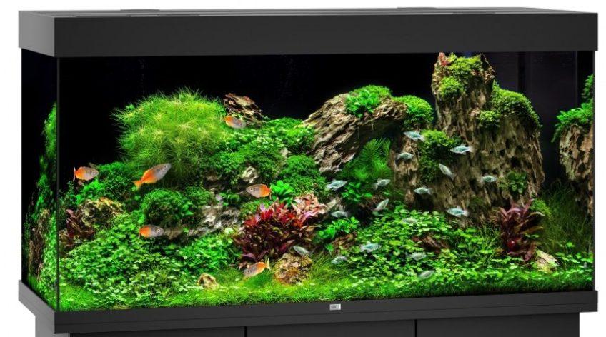 Тропічний акваріум