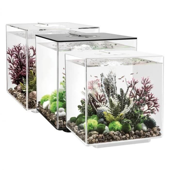 Вибір акваріума