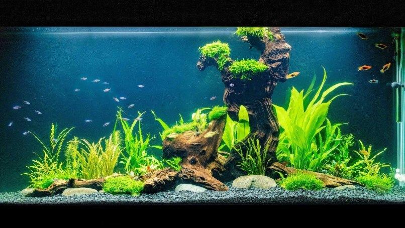 Вибір акваріумних рибок